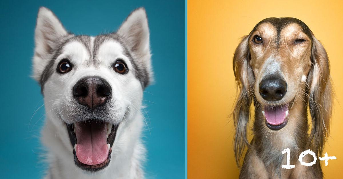 Dokázali jsme, že každý pes má svou lidskou osobnost