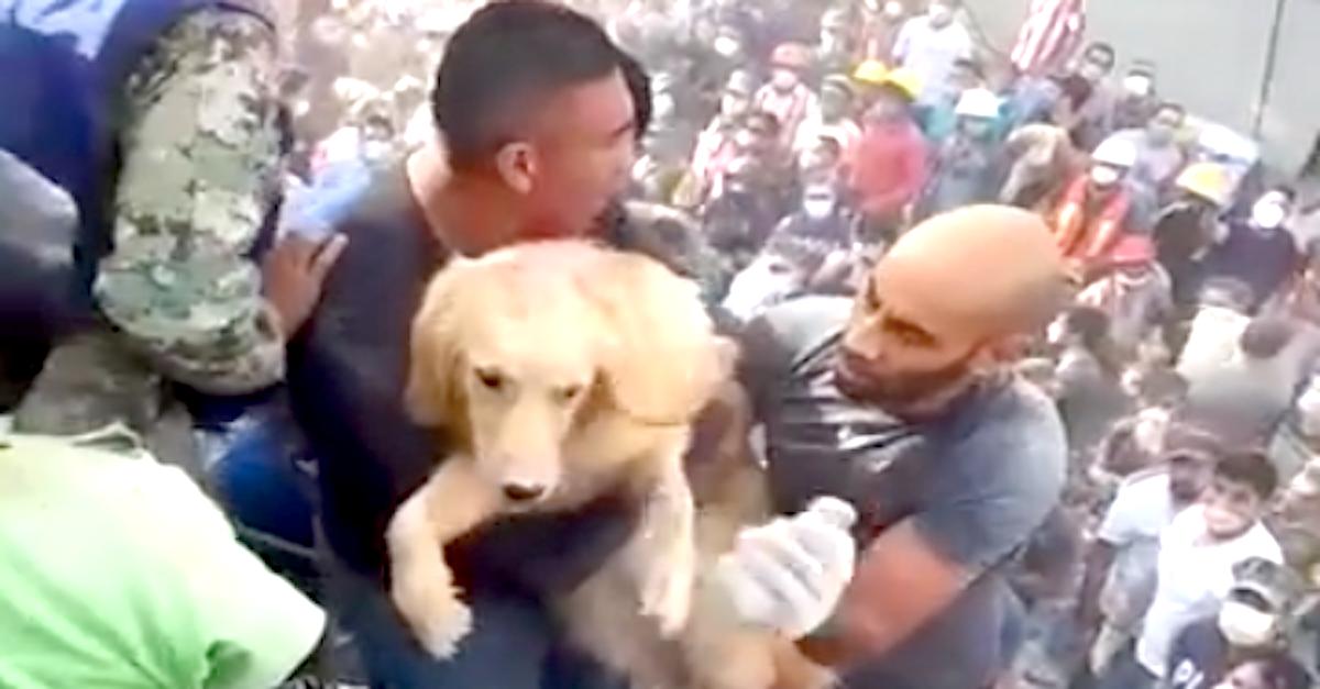 V sutinách po zemětřesení objevili přeživšího psa [VIDEO]