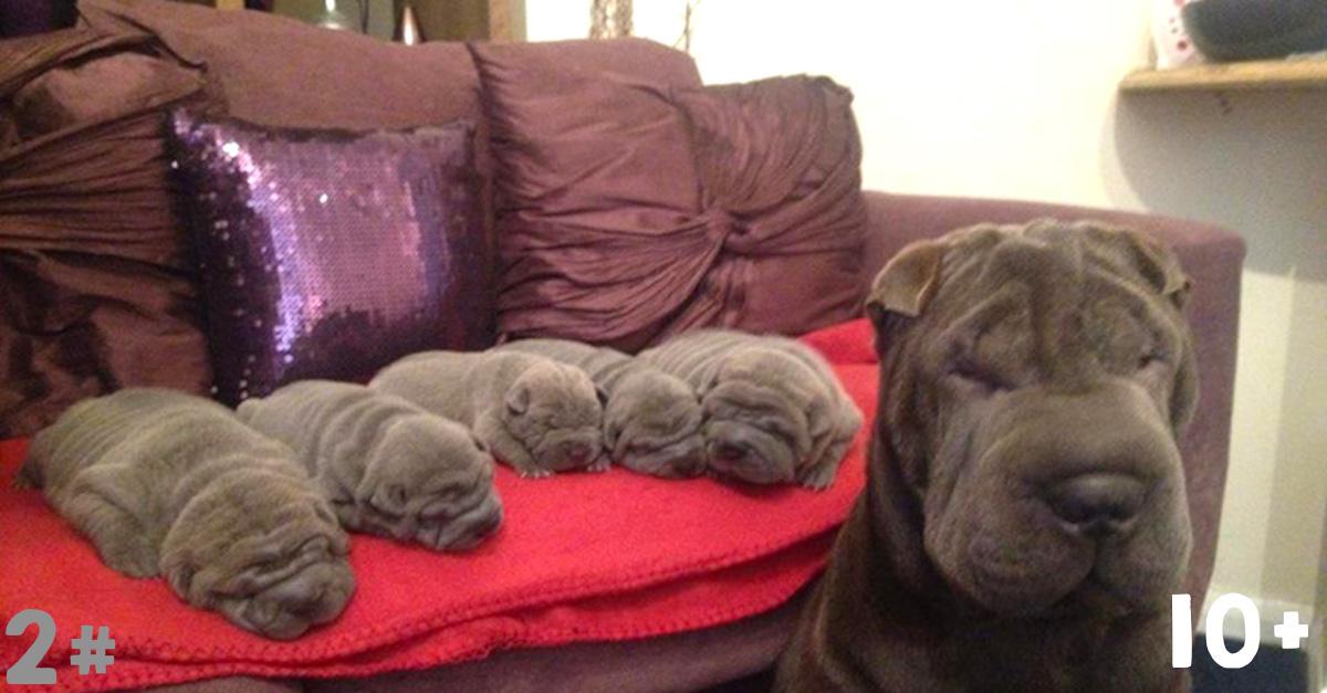10+ psů se svými roztomilými drobečky ❤