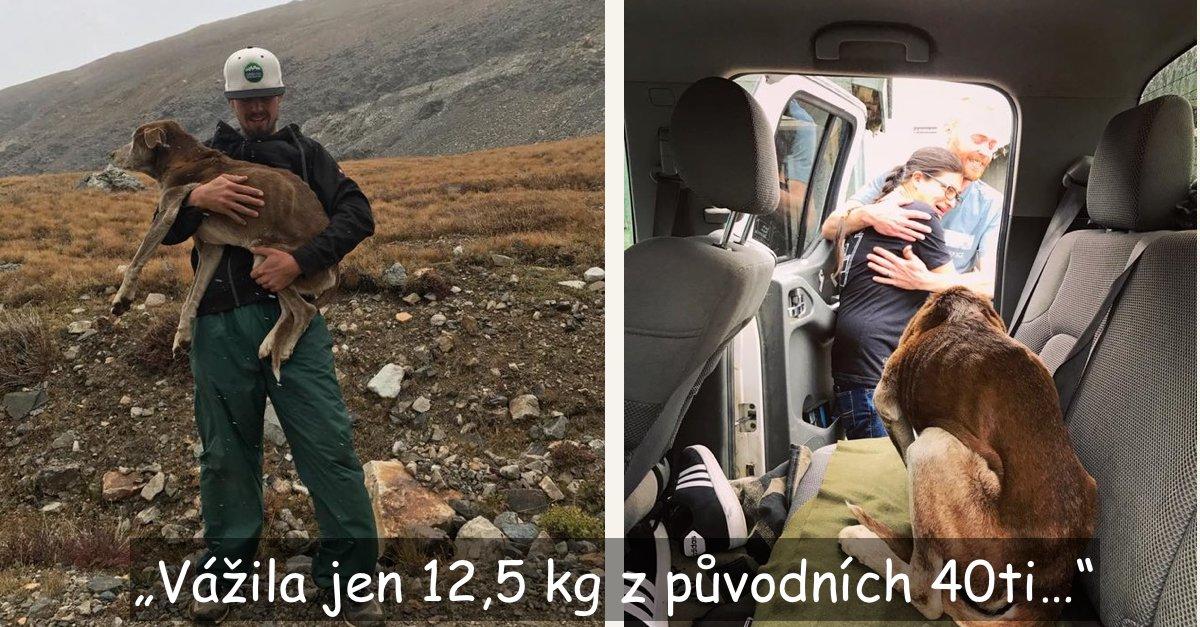 Vysokohorští turisté objevili uvězněného psa, který v horách strávil 6 týdnů