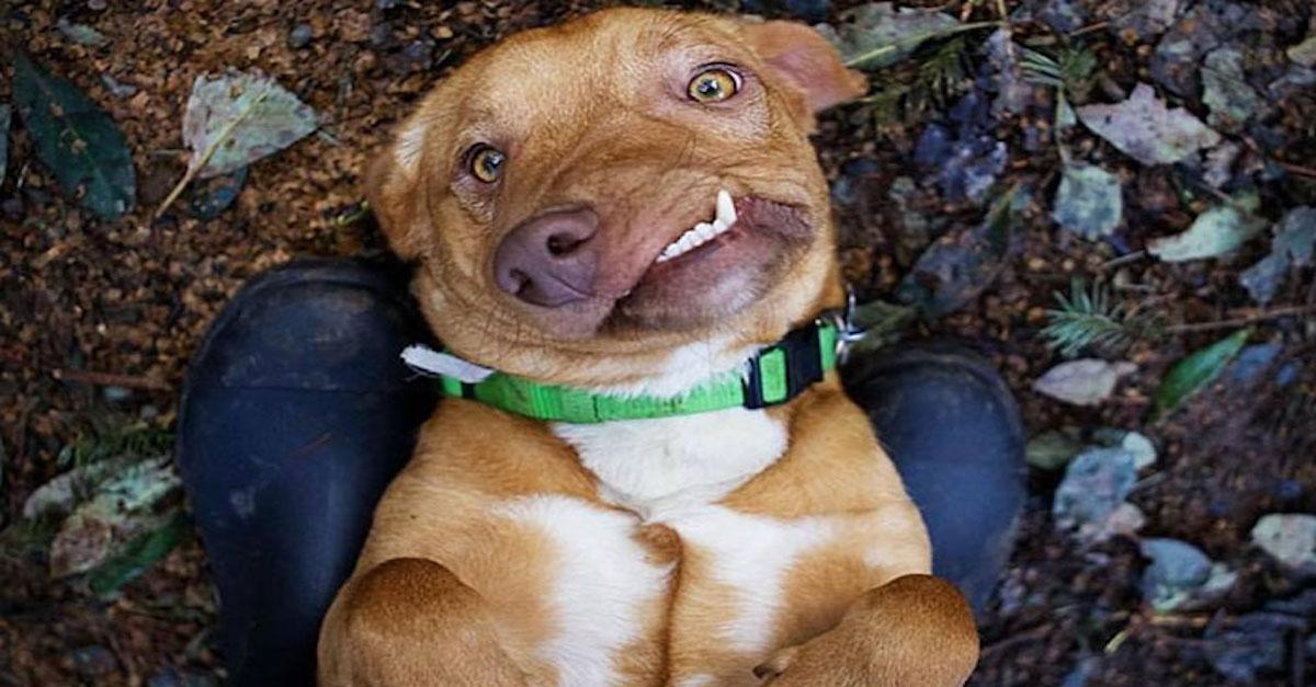 Tohle je Picasso, dokonale nedokonalý pes, kterého nikdo nechtěl