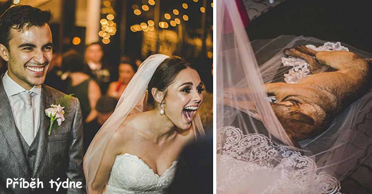 Reakce svatebního páru na psa z ulice, který narušil svatební slib, je dokonalá