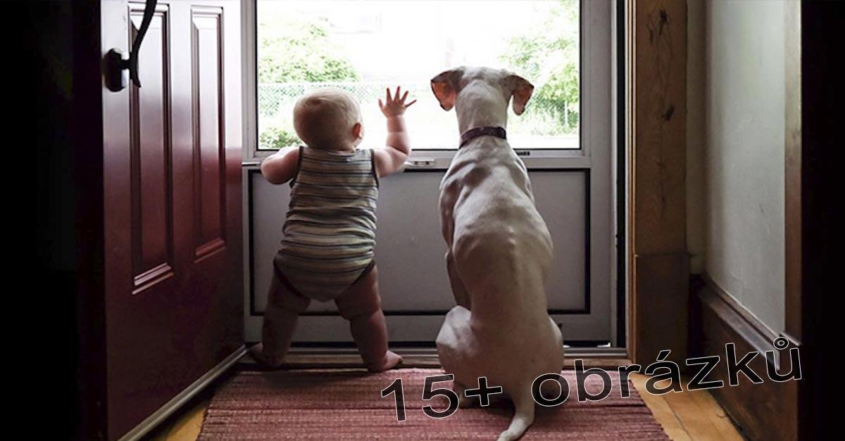 Týraný pes se bojí naprosto všeho, kromě tohoto dítěte, jejich fotografie nás zahřály u srdce