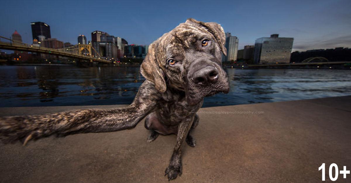 Psi, kteří dokonale zvládají selfie (10+ obrázků)