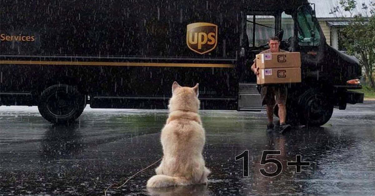 Ukázalo se, že tenhle kurýr poštovních zásilek má Facebook skupinu pro psy, které potká na cestách, a tohle i Vám zlepší den