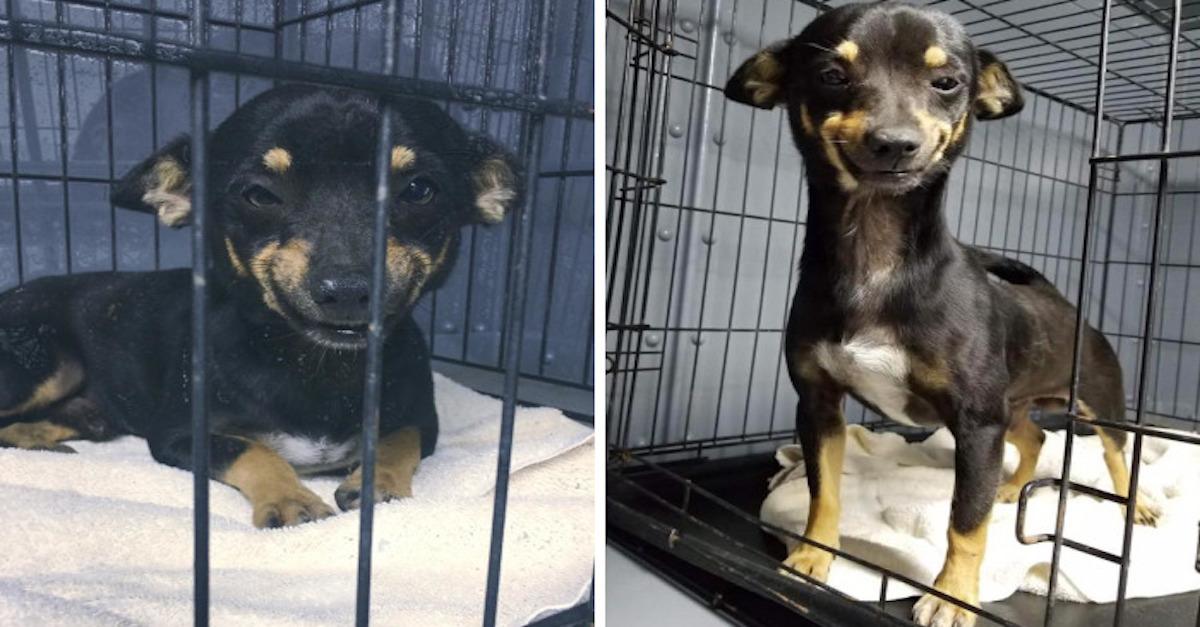 Tohohle policejního psa z útulku jsme si zamilovali pro jeho PSÍ ÚSMĚV