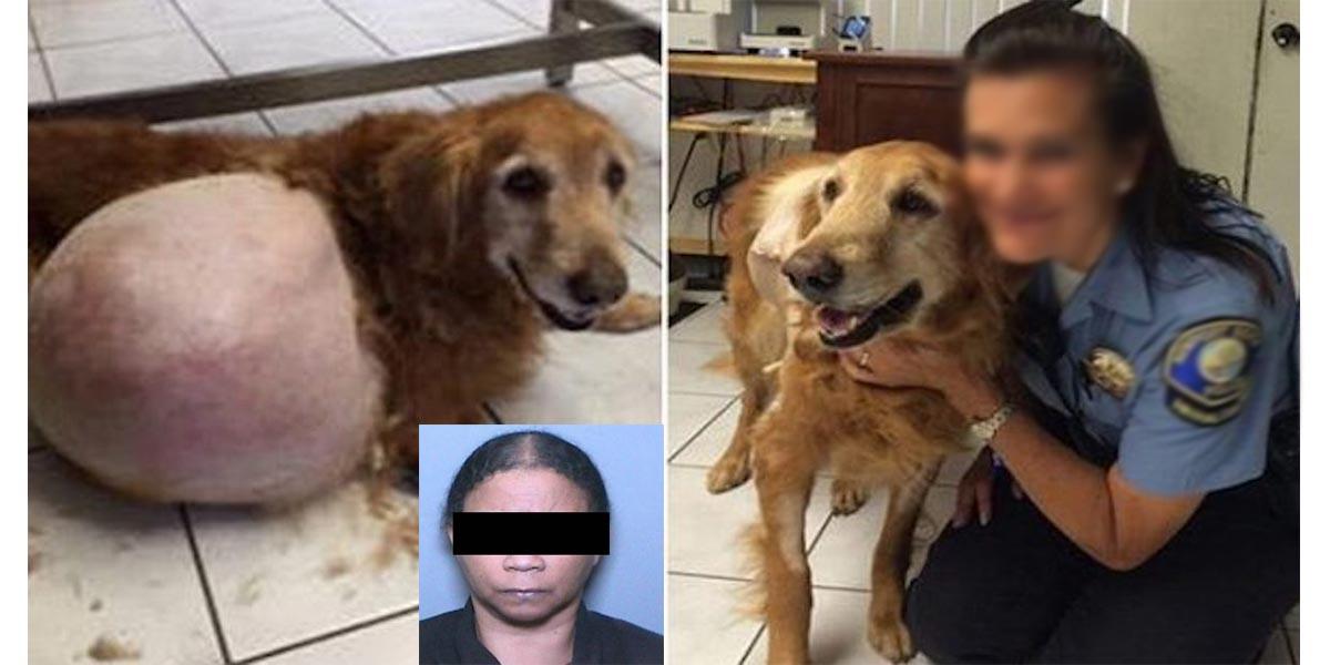Žena, která zahodila psa s nádorem dostala zákaz vlastnit zvířata