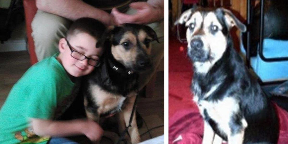 Neobvyklý únos, štěně už je zpět se svou rodinou!
