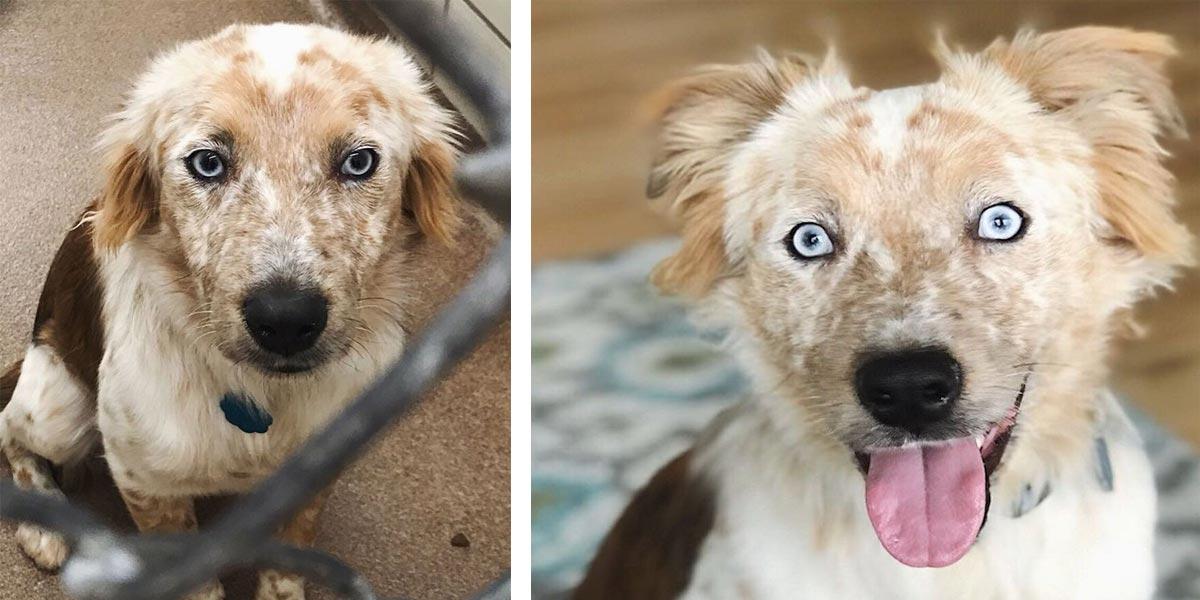 Žena adoptovala psa na své 25. narozeniny. Fotografie PŘED a POTÉ mluví za vše