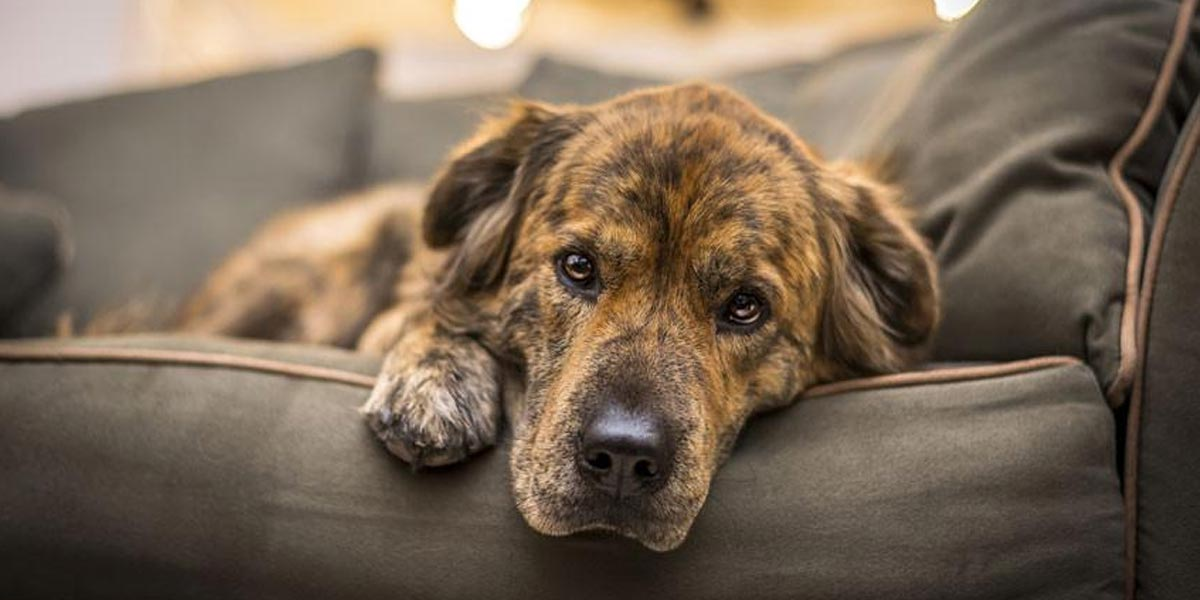 Tohle jsou důvody, proč adoptovat starého psa