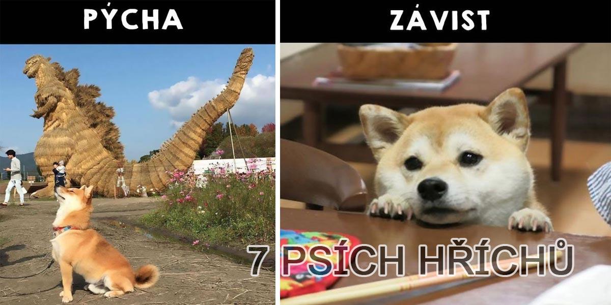 Je Váš pes pašák? 7 příznaků hříšného psa