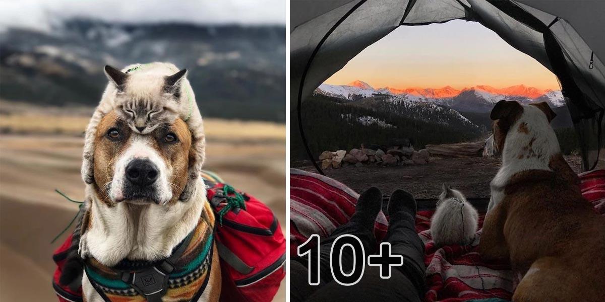 Kočka a pes, kteří společně cestují 3 roky, jejich fotografie mluví za vše