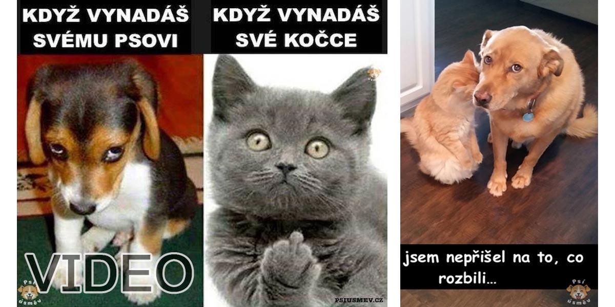 Novodobé soužití psů a koček (5+ obrázků)