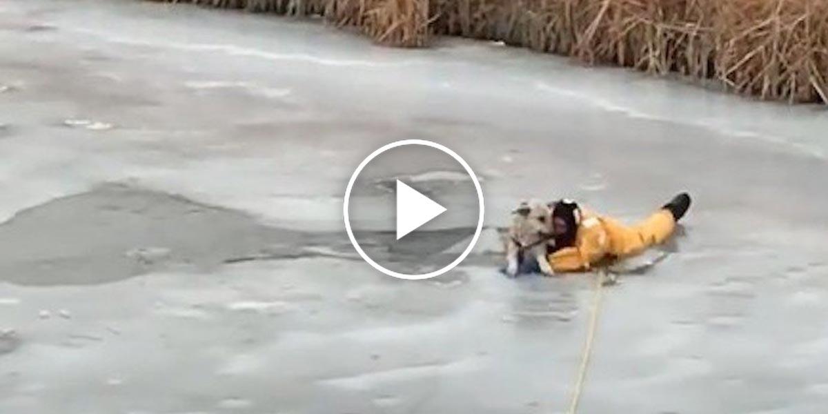 Rodinný výlet a chvilka nepozornosti: Psa z ledu vytahovali 3 hasiči