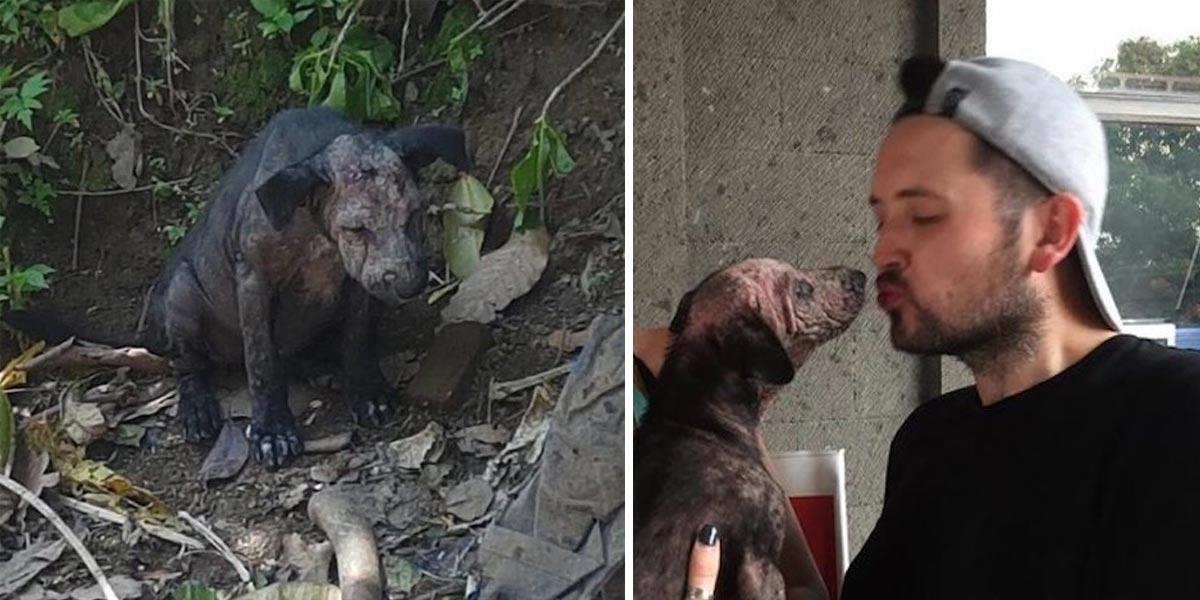 Turisté našli nemocné, vyděšené štěně a přesně věděli, co mají dělat