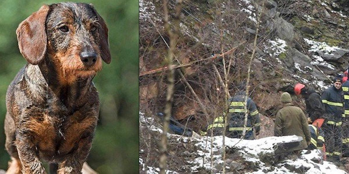 Jezevčíka Mildu hasiči nevysvobodili, po 8 dnech pomohla hárající fenka!