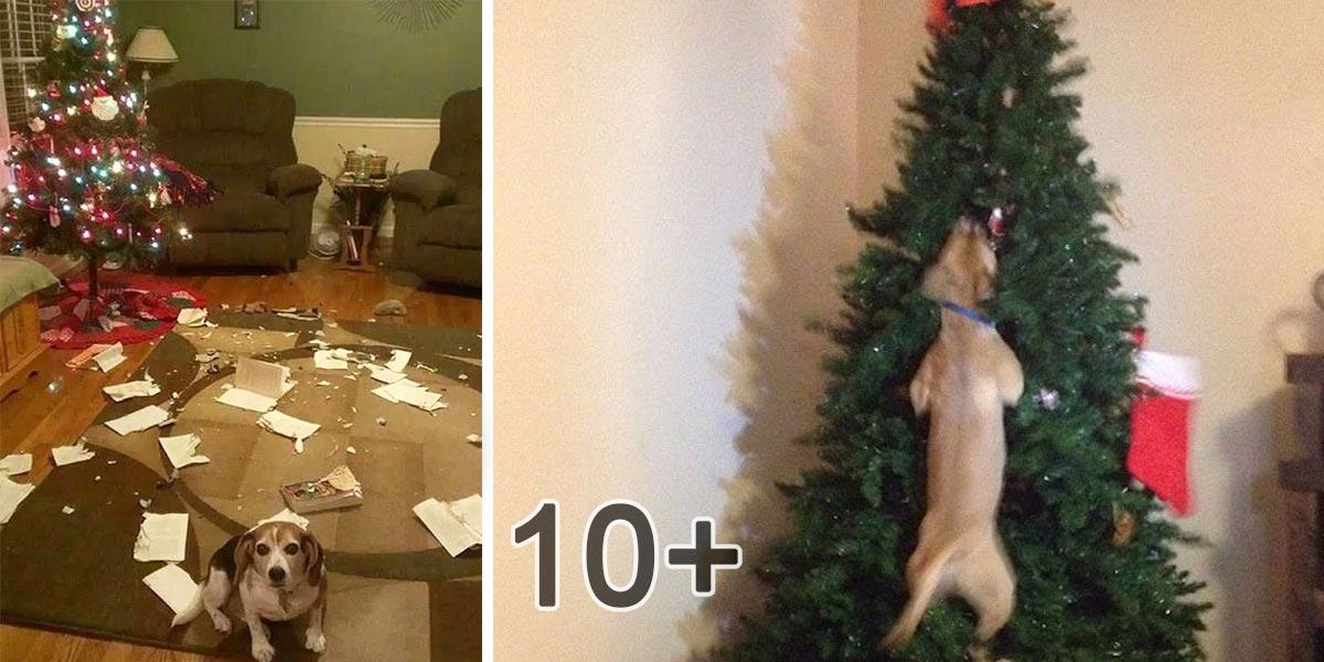 10+ psů, kteří zničili Vánoce