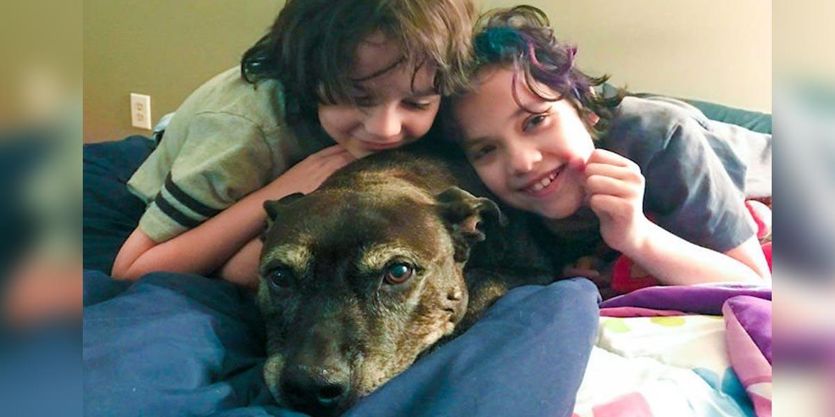 Starší pes s poslední fází rakoviny vyhrál 750 tisíc Kč pro své zachránce