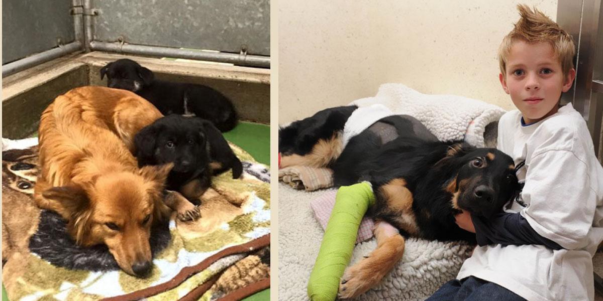 5 případů, kdy psi překvapili své majitele hrdinským činem
