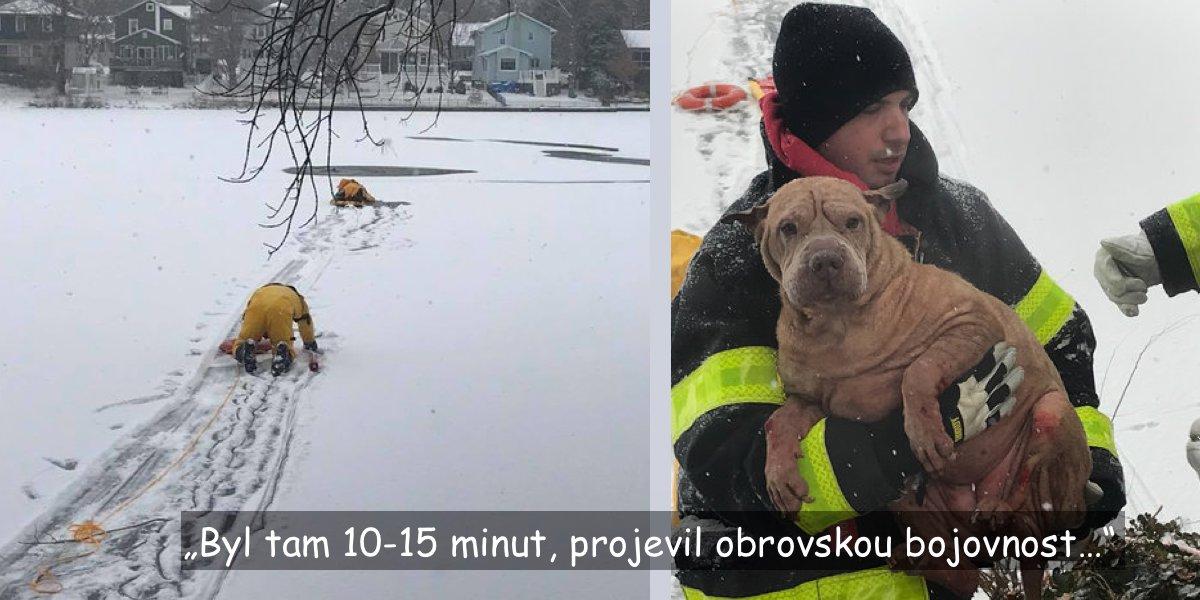 Pod fenkou shar-pei se probořil led, hasiči zasáhli právě včas