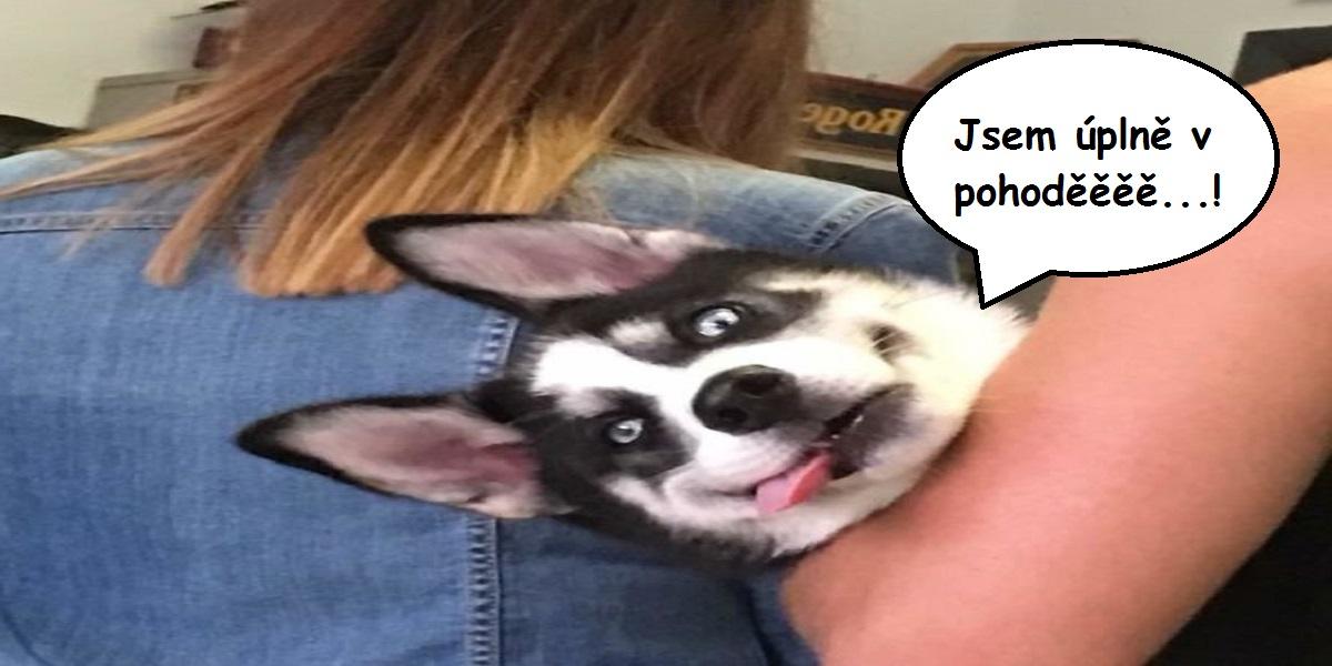 10+ psů a koček po návštěvě veterináře, jejich výrazy mluví za vše...