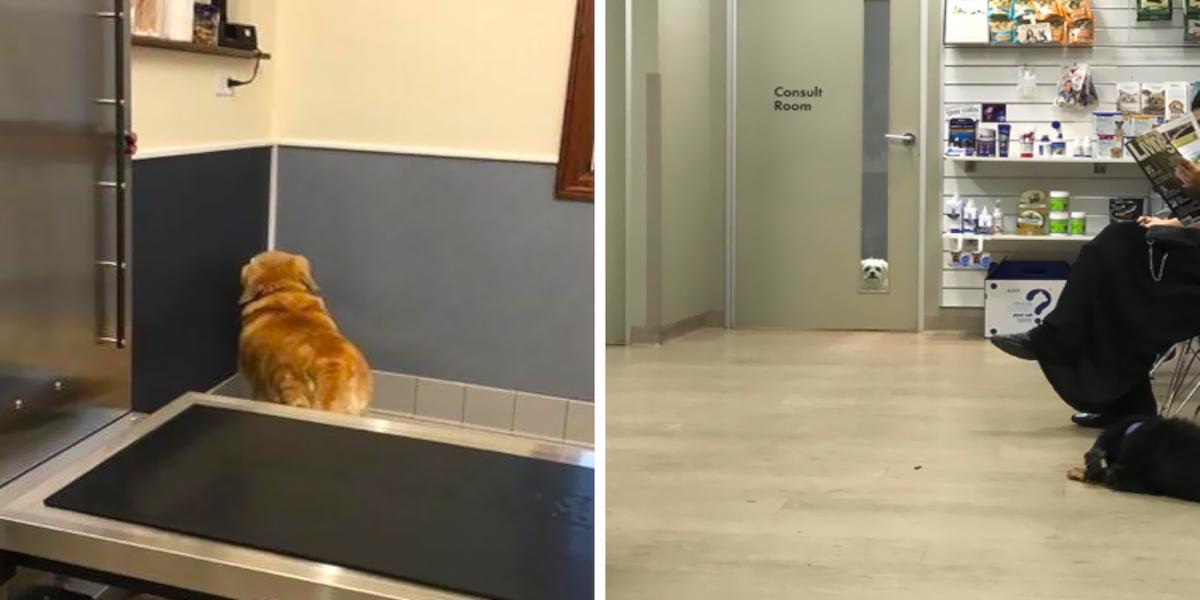 10+ šokujících momentů, kdy si psi uvědomili, že nejedou na výlet, ale k veterináři