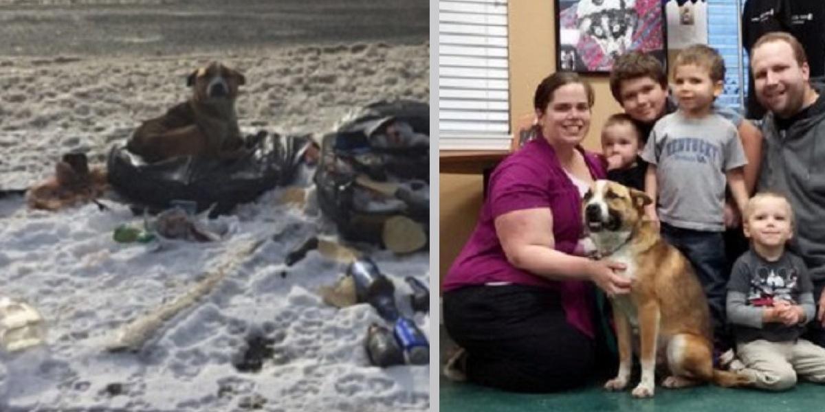 Mladý pár našel odloženého psa v hromadě odpadků, nakonec se rozhodli správně