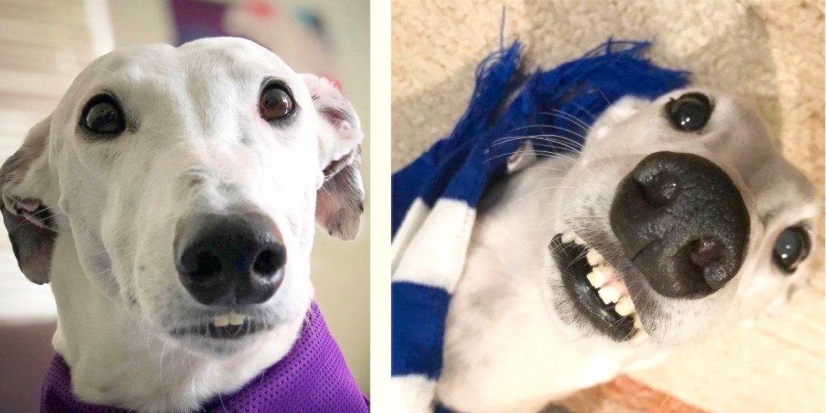 """Pes s """"lidskými zuby"""" pomáhá své majitelce nacházet nové přátele, kdekoliv se objeví"""
