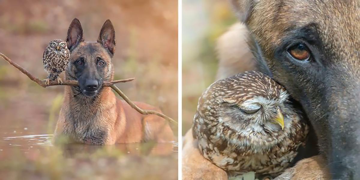 30 obrázků, které odkrývají nerozlučné přátelství psa a sovy, vás zahřejí u srdce ♥