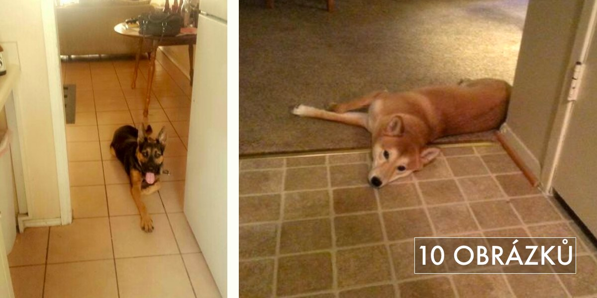 """10 psích odvážlivců, kteří pokoušejí limity pravidla """"Do kuchyně nesmíš!"""""""