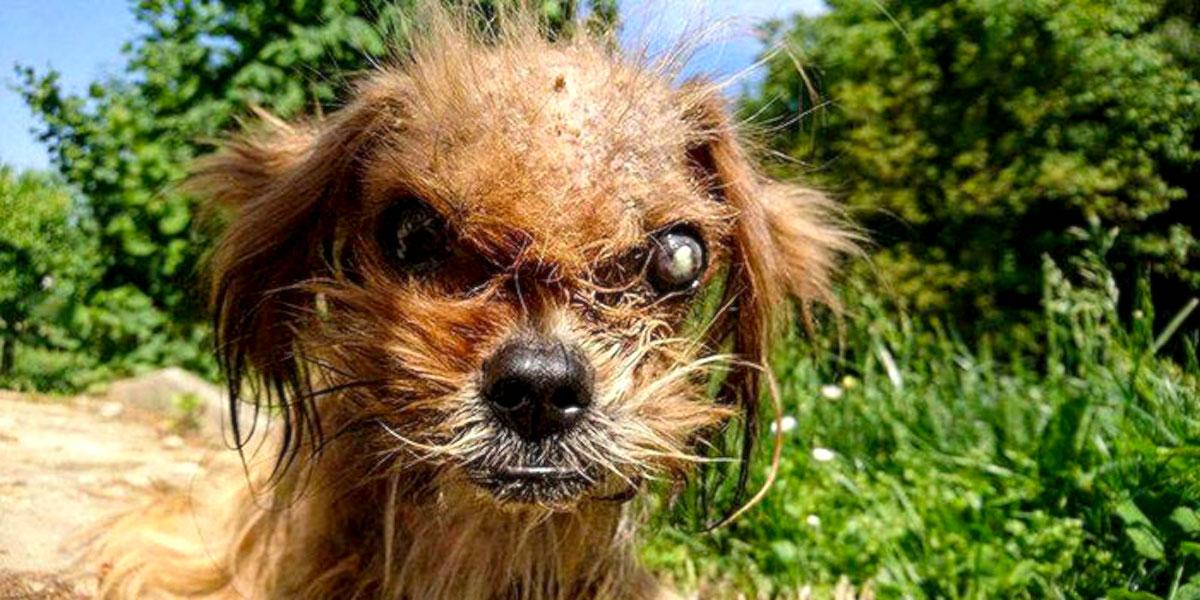 """Je neuvěřitelné, jak se tenhle """"děsivý"""" pes proměnil za 8 měsíců, po záchraně z ulice"""