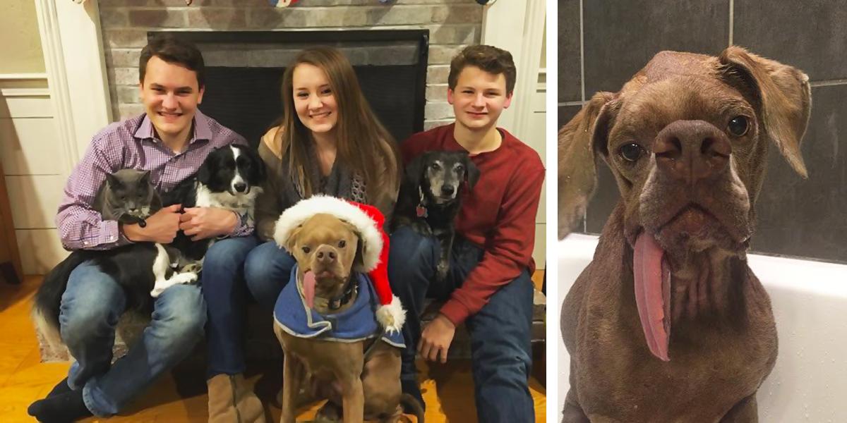 """Pes s opravdu """"netradičním obličejem"""" našel rodinu, která ho miluje jako dokonalého"""