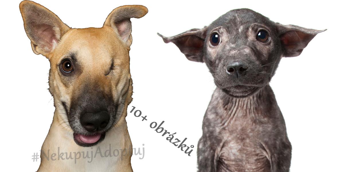 Dokonale nedokonalí chlupáči očima profesionálního fotografa (10+ obrázků)