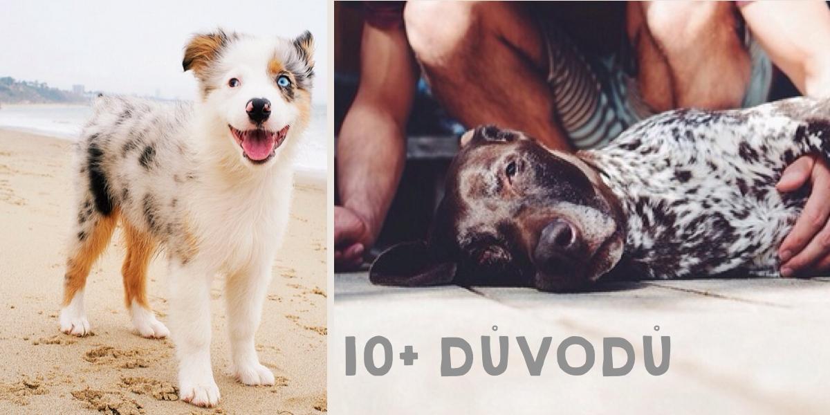 10+ způsobů: Jak nám psi zlepšují život
