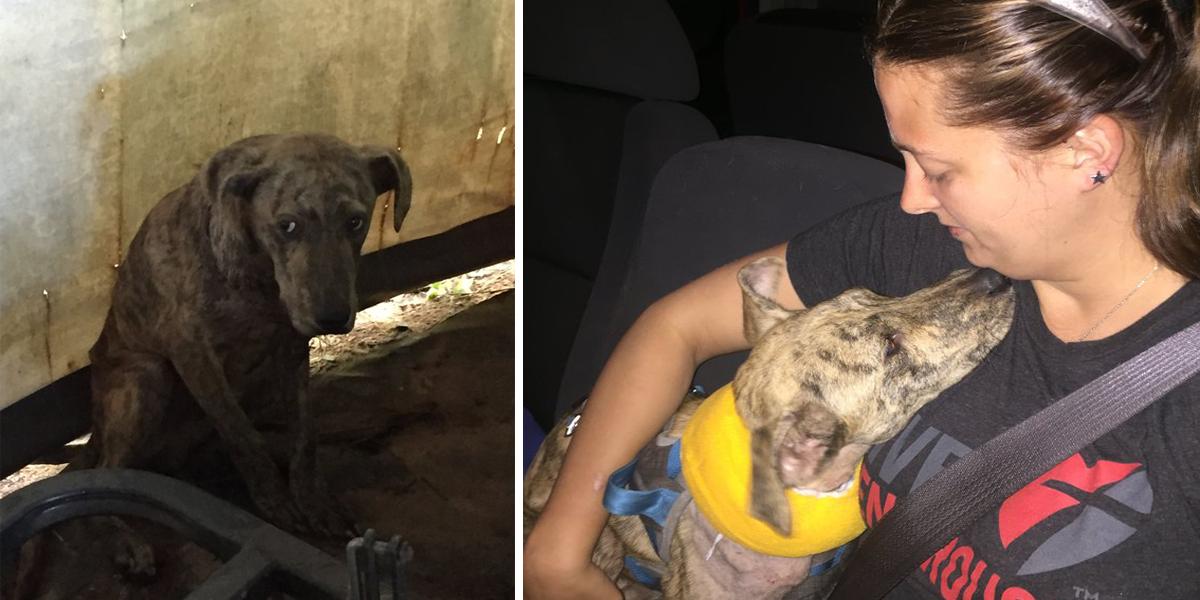 """Tahle žena našla vyděšeného """"kojota"""" ve skladovacím stanu, ale pak se ukázalo..."""