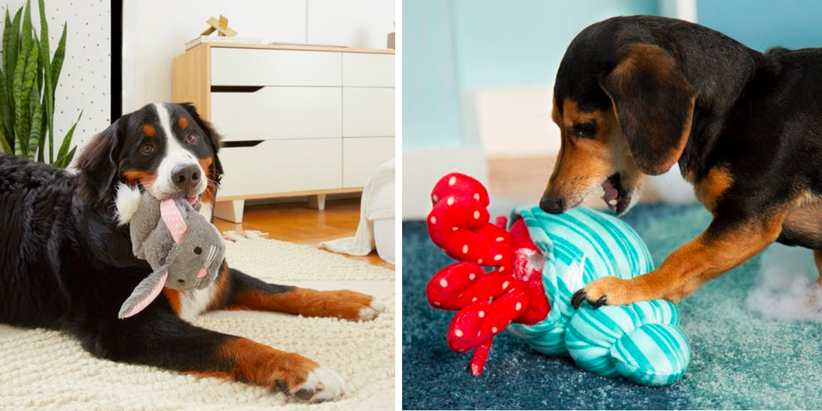 """Proč psi milují pískací hračky, opravdu kvůli svému """"zabijáckému instinktu?"""""""