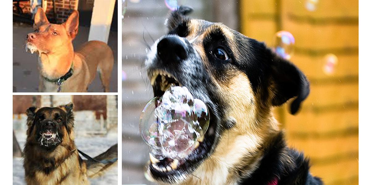 6 důvodů: Proč může mít váš pes pěnu u tlamy a přitom nejde o vzteklinu...