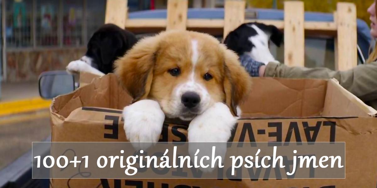 101 filmových jmen pro psy, které určitě (ne)znáte