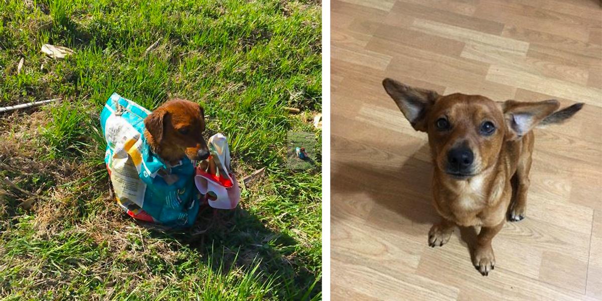 Manželé našli u silnice psa v pytli, ale poté přišli na to, co tomu předcházelo...