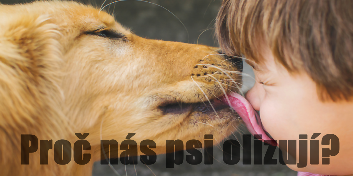Proč nás psi tak rádi olizují? Tady máte 8 důvodů
