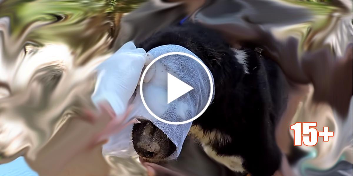 Úžasná záchrana toho nejvíce zuboženého psa, který měl obrovskou sílu bojovat