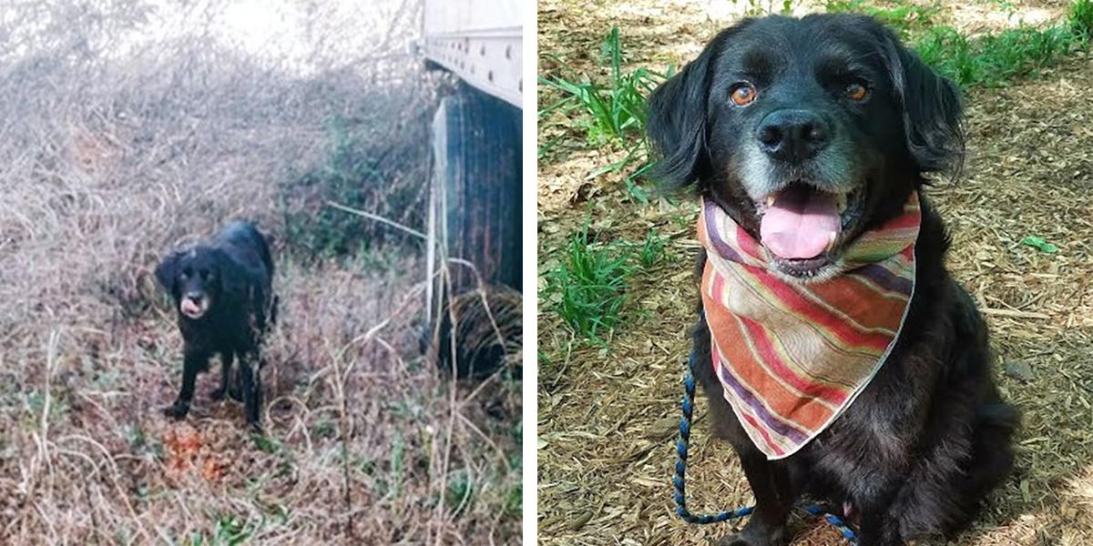 Žena roky krmila psího tuláka, pak ale zmizel neznámo kam, po dlouhých měsících přišlo rozuzlení…