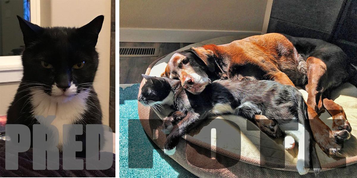 Po 13 letech v jednom domě se tahle fenka s kočkou konečně rozhodly skamarádit...