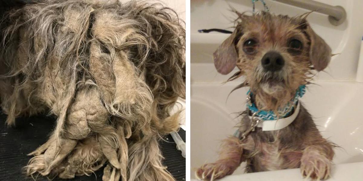 """18 psíků uvězněných v """"domě hrůzy"""" se nyní dočkalo pomoci"""