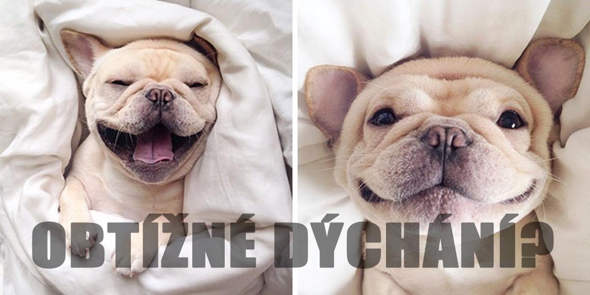 50% psů s krátkým čumákem nemůže dobře dýchat. Pomoc je ale snadná...