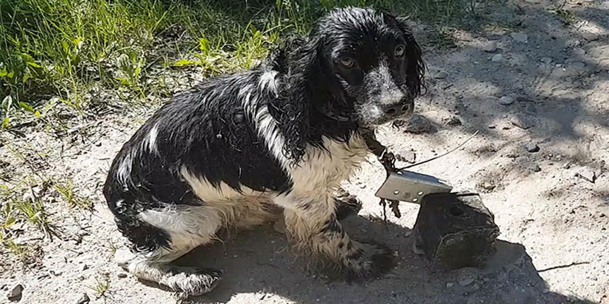 Žena našla promočeného psa s podivnou věcí kolem krku, když zjistila, co to je, rozplakala se...