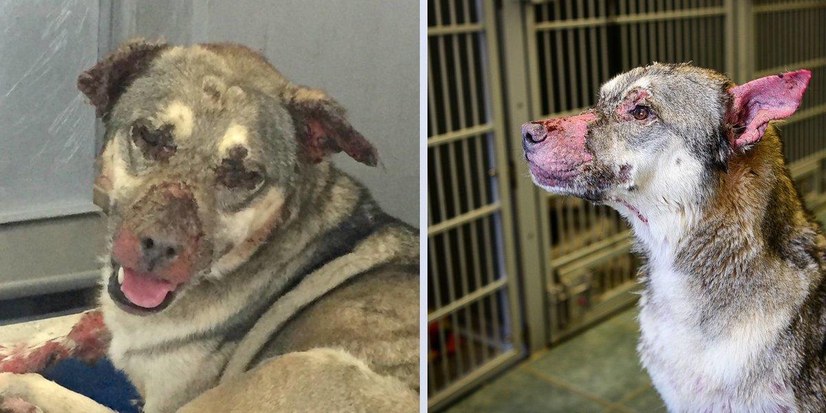 Tenhle pes přišel téměř o všechnu srst, přesto se nikdy nepřestal usmívat