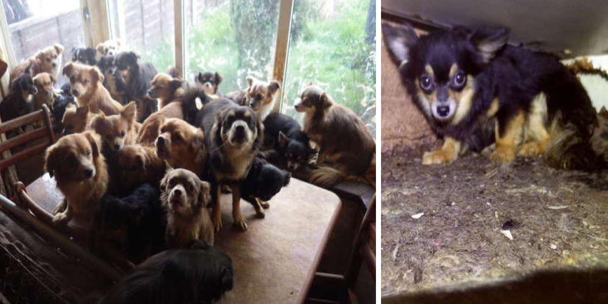 Manželský pár odmítl kastraci psů. O čtyři roky později policie našla následující…