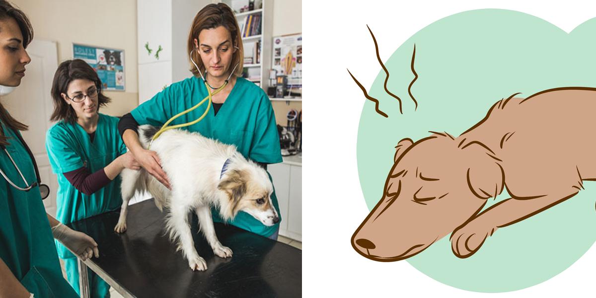 Veterinář odhalil, co se děje se psy před jejich smrtí. Tohle jsme nečekali...