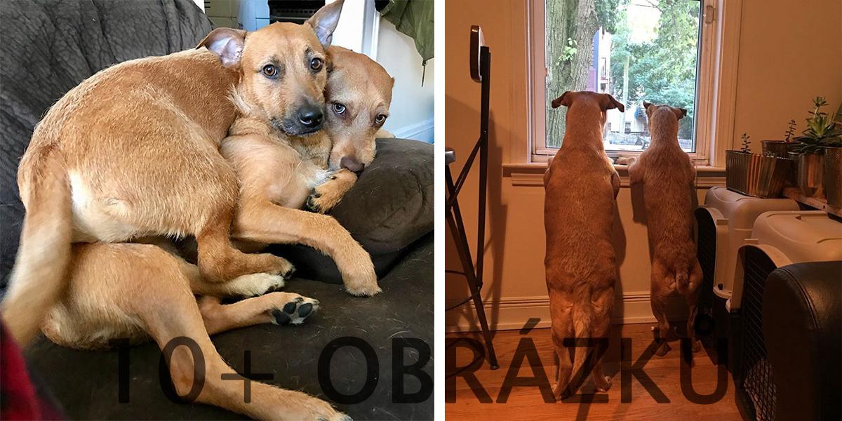 Tenhle pes potkal při procházce své dvojče a přesvědčil svou majitelku, aby ho adoptovala...